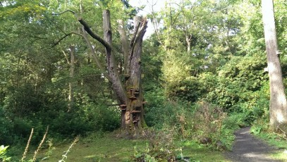 The Elf tree, Moorlands Woods, York