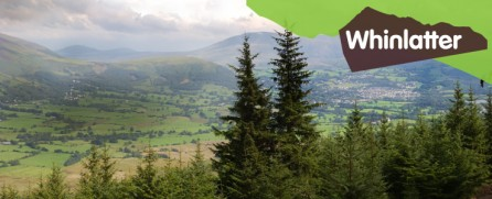 A view from Whinlatter Forest